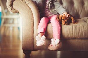 raumduft bei hunden